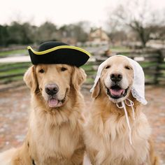 Happy National Pet Day; Colonial Williamsburg National Pet Day, Colonial Williamsburg, Animals Planet, Bring It On, Pets, Happy, July 4th, Instagram, Hotels