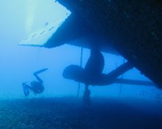 Students checking out the reef shark underneath the propeller of a ship wreck. www.seamester.com