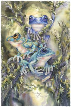 Bergsma Gallery Press :: Paintings :: Insects & Amphibians :: Frogs :: Frog Wild - Prints