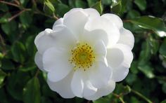 encuentra diferentes tipos de flores para tu dia especial!