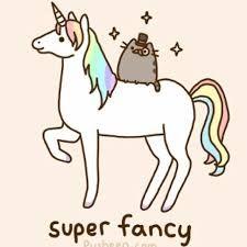 Bildergebnis für rainbow unicorn kitten