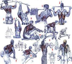 Een prachtige schets die duidelijk de rugspieren laten zien die je traint bij deze oefeningen.