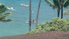 Basking in the Hawaiian sun