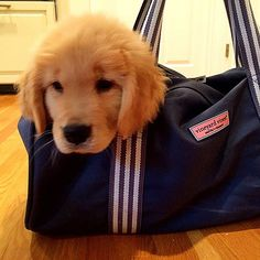 Golden retriever AND vineyard vines? Pure perfection. I want that puppy!!!