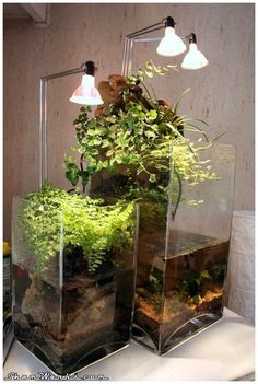 gorgeous free standing Vivarium/Paludarium...i want some!