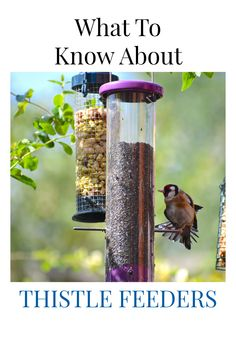 You've seen a thistle feeder and perhaps even own one, but do you know all there is to know about a thistle feeder? Here discuss what the best type of thistle feeder is, what the best bird food for these types of feeders are, and what some of the potential problems are for thistle feeders.