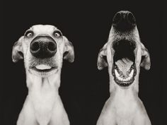 Fotógrafa alemã retrata a expressividade de seus cães em incríveis fotos