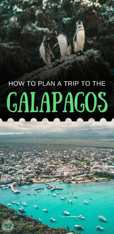 Interested in traveling to the Galapagos? Check out our tips on how to plan a trip to the Galapagos Islands, Ecuador, including information on cruises, land based tours, liveaboard diving tours and more