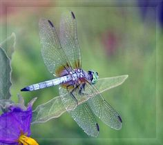 Dragonflies are magical beings..saw 3 today