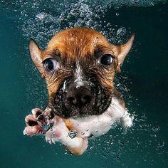 Underwater dog   photo by @sethcasteel Tag a friend below