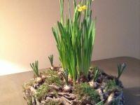 Bollen Bloeiend Voorjaar : Beste afbeeldingen van kh tc bloembollen photograph album