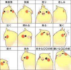 Cockatiel emotions, by Era-Artwork, via DeviantART.