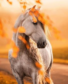Andalusian and Lusitano - horse breeds Funny Horses, Cute Horses, Pretty Horses, Horse Love, Beautiful Horse Pictures, Most Beautiful Horses, Animals Beautiful, Cute Animals, Cute Horse Pictures