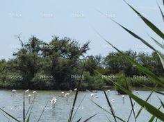 Flamingos in Camargue, France stock photo 76761563 - iStock