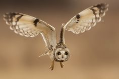 Lift Off by Henrik Nilsson    A wild short eared owl takes off into flight.    Please note this image is copyright protected.    Henrik Nilsson: Photos · Blog