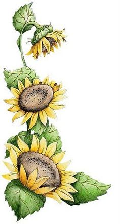 Virágok print - soma - picasa web albums sunflower clipart, one stroke painting, tole One Stroke Painting, Tole Painting, Fabric Painting, Painting & Drawing, Sun Drawing, Sunflower Drawing, Sunflower Art, Drawing Flowers, Flower Drawings