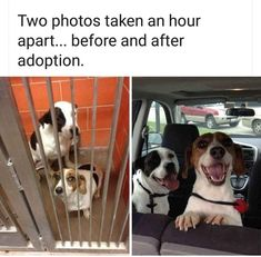 Before and after adoption.