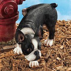 Design Toscano Lifting a Leg Boston Terrier Naughty Dog Figurine