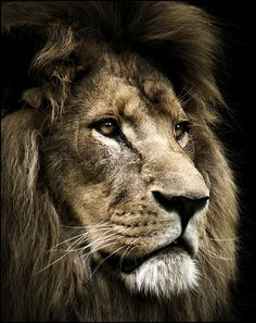 Such a noble creature | Shared by LION