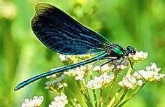 Resultado de imagem para nature fairies