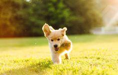 El adorable perrito que nació sólo con tres patas llamado Ollie, no está dejando que su disca...