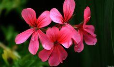 Flower 59 by Mohammad Azam