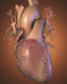 A pumping heart. Will Hydroxycut side effects affect your heart too?