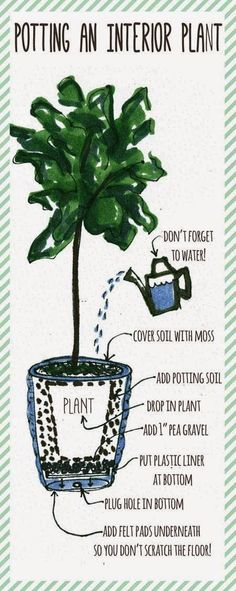 Potting an Indoor Plant/Tree.