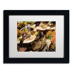 Mushrooms in the Leaves by Kurt Shaffer Matted Framed Photographic Print