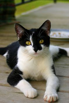 """""""What's the difference between a cat & a dog? A dog ponders his relationship with man: """"He feeds me, he grooms me, he takes care of all my needs... He must be God"""". A cat thinks: """"He feeds me, grooms me, takes care of me. I must be God."""" Friend Tali"""
