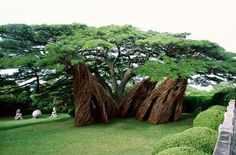 Patrick Dougherty is a builder and yet not an architect – he is perhaps best described as an artist and sculptor, a wood craftsman the likes of which most of us have never seen. Rather than cutting, planing, leveling and assembling rectilinear wood structures he shapes living trees into amazing natural tree buildings.