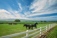 2372 Baldwin Avenue, Makawao, Hawaii, 96768 $12,800,000 | Maui, Oahu, Hawaii Real Estate Photographer