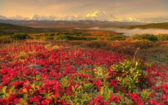 mountains landscapes nature spring red flowers  / 2560x1600 Wallpaper