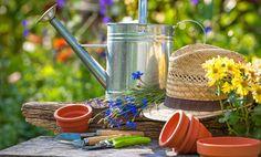Trucchi di giardinaggio, 3 segreti che non sapevate (forse)! | I sempreverdi
