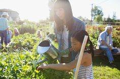 Mother and daughter watering plants sunny community garden