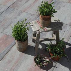 Kruidenplanten in potten op je terras zorgen voor een heerlijke aromatische geur