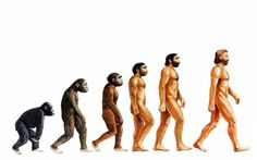 Evolution to blame for bad backs, dropped arches and impacted wisdom teeth, say scientists  Evolution may have catapulted humans to the top of the food chain but it also landed us with bad backs, dropped arches and impacted wisdom teeth, according to scientists.