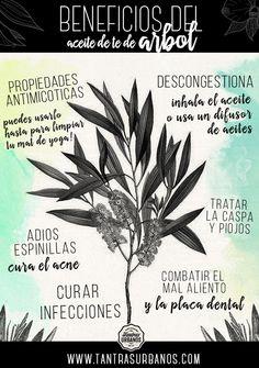 Beneficios del aceite de té de árbol  