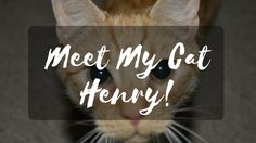 I am a huge Cat lady, always cats over dogs, so read all about the cat love of my life, Henry! Huge Cat, Cat Love, Love Of My Life, Blogging, Meet, Writing, Reading, Cats, Gatos