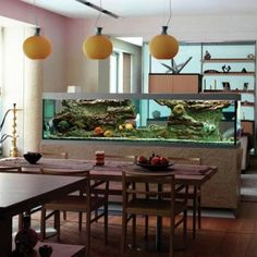 Aquarium Designs