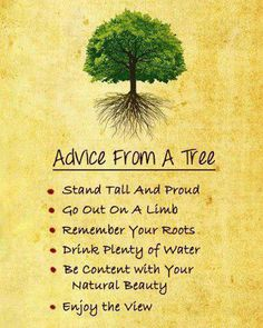 Trees can actually teach us many great things :)
