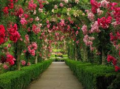 Path of Roses at Butchart Gardens, Canada - hedges, vancouver island, blossoms, park