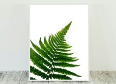 Gorgeous Fern Leaf Print for Instant Download. Print this Green Fern Art from…