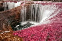 The most beautiful river in the world-Caño Cristales - National Natural Park in the Sierra de la Macarena, Colombia World's Most Beautiful, Beautiful World, Beautiful Places, Beautiful Scenery, Amazing Places, Oh The Places You'll Go, Places To Visit, Travel Around The World, Around The Worlds