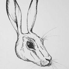 Better shoot of my Hare for Inktober #Carmazin #inktober2017 #hare #drawing #challenge #mystyle #wild #animal #animalillustration #inktober