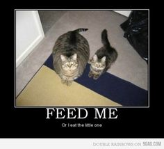 Feed Me or I eat the little one