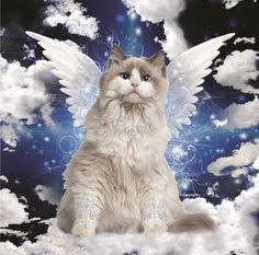 "February 2016 ""Celestial Whiskers"" Cat Calendar Fantasy cats with wings & fur embellishments Animals And Pets, Baby Animals, Cute Animals, Cats 101, Cats And Kittens, Gato Angel, Pet Loss Quotes, Cat Calendar, Frida Art"
