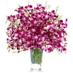 proflowers free shipping promo codes