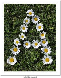"""A - Letter of daisies"" - Art Print from FreeArt.com"