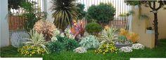 arbustos pequeños para jardin - Buscar con Google